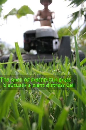 plant distress call, mowing lawn, lawn mower, cutting grass
