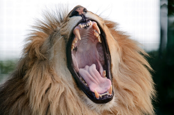 I Bet I Can Make You Yawn