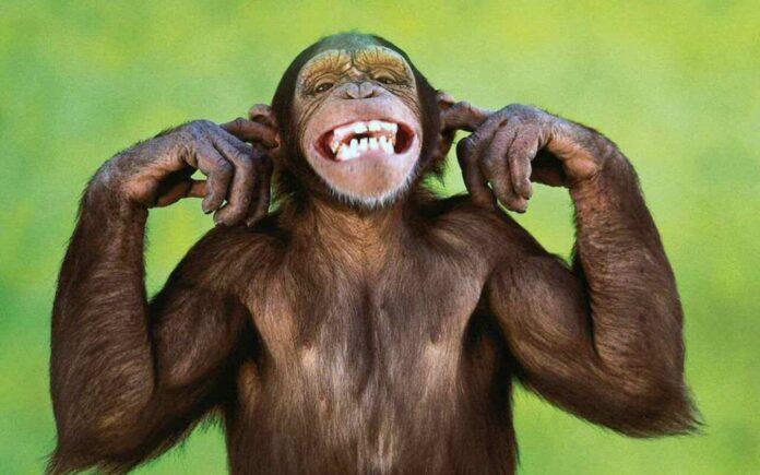 Monkey Photos and Smiling