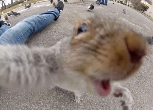 squirrel selfie, animal selfies