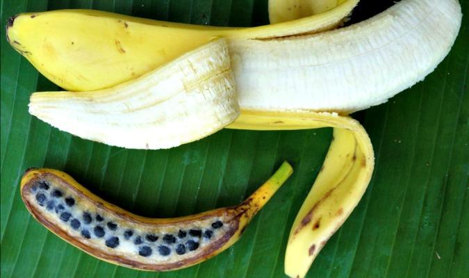 Banana Fruit, Banana Tree, Banana Seeds, Banana Anatomy, Banana Plant,