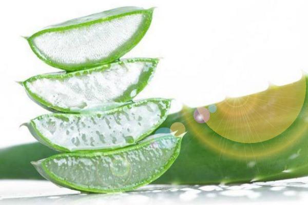 Household Uses for Aloe Vera