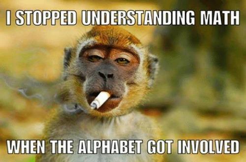 Baby Monkey Memes, Monkeys, Cute Monkeys, Baby Monkeys, Baby Animals, Memes