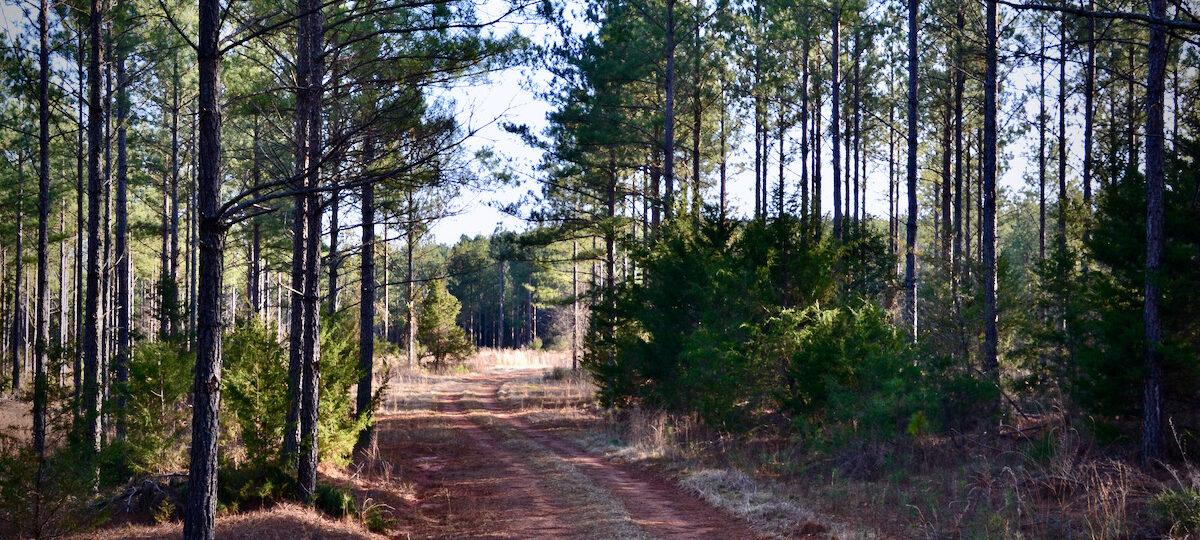 Bishop Road Pines