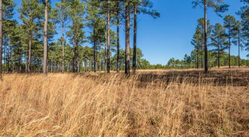 Timber: Pine Ridge 2