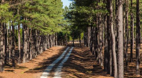Timber: Pine Road