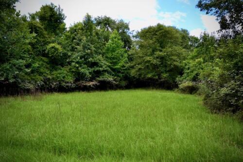 Wildlife Opening for Planting Seasonal Game Food Plots