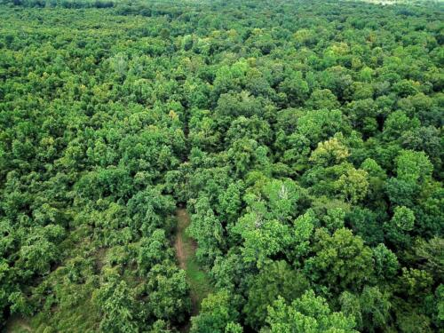 Woods Road and Wildlife Opening in the Bottomland Hardwood Stand
