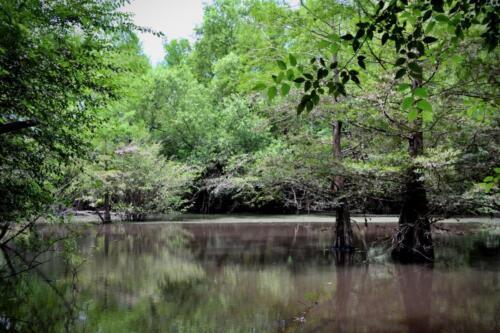 Isolated Wetland Habitat