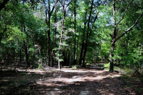 Oak Dominated Uplands