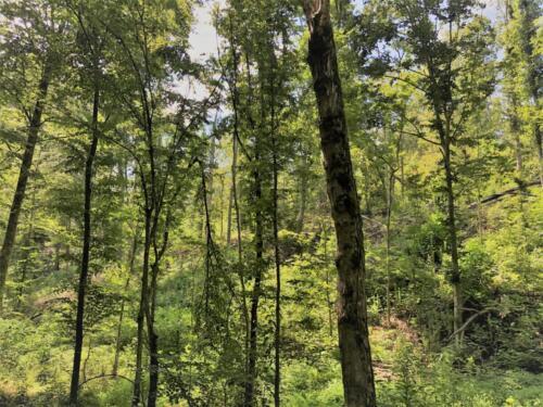 Big Cedar Parcel I Woods