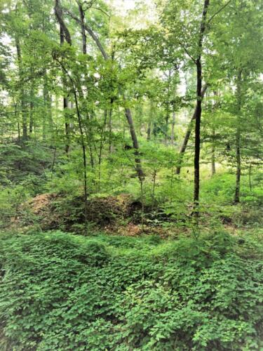 Big Cedar Parcel D Woods