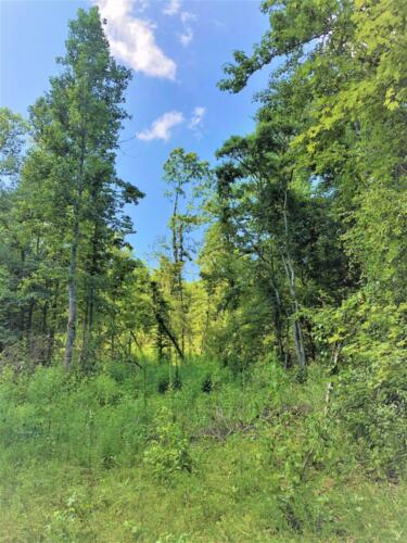 Big Cedar Parcel F Woods