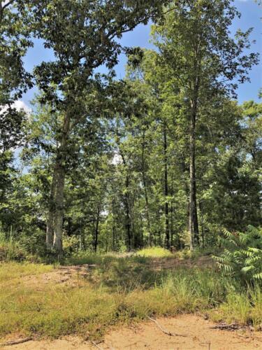 Big Cedar Parcel H Woods