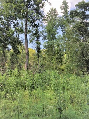 Big Cedar Parcel J Woods