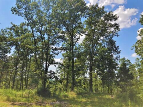 Big Cedar Parcel K Trees
