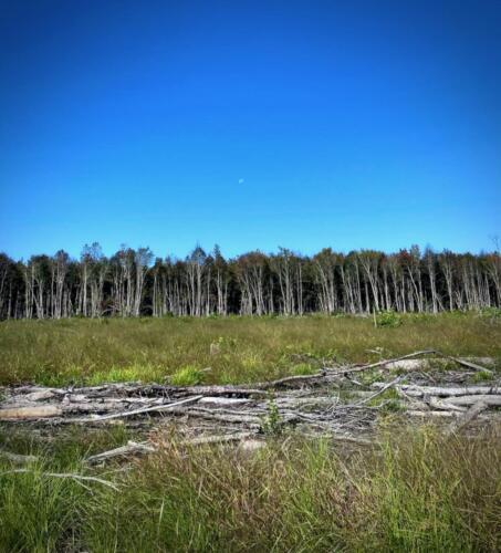 Coker McLaughlin Tree Line