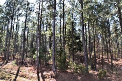 Carilsle West Tract Timber