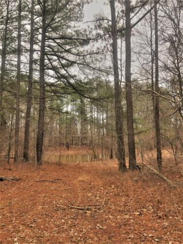 Cullom Tract 2 Woods