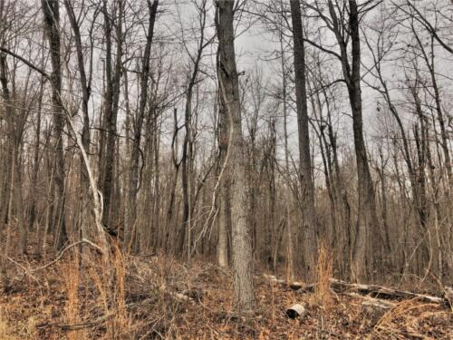 Cullom Tract 5 Woods