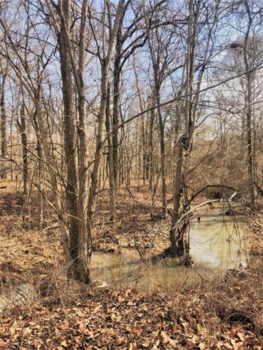 Cullom Tract 6 Creek