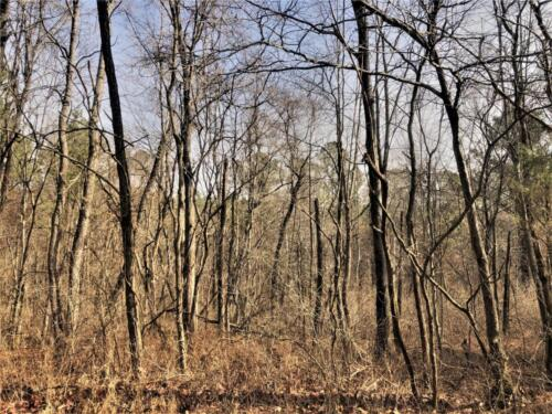 Cullom Tract 6 Woods