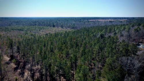 Wagener Trail Pines