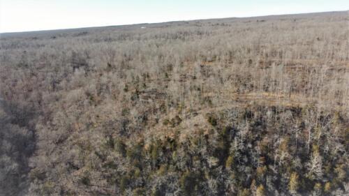 Big Cedar Parcel A Trees