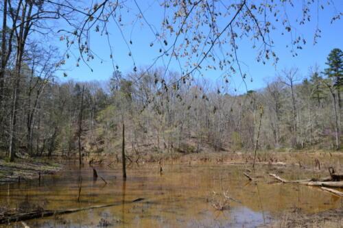 Fairforest Duck Pond