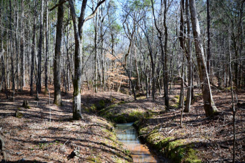 Carlisle Stream