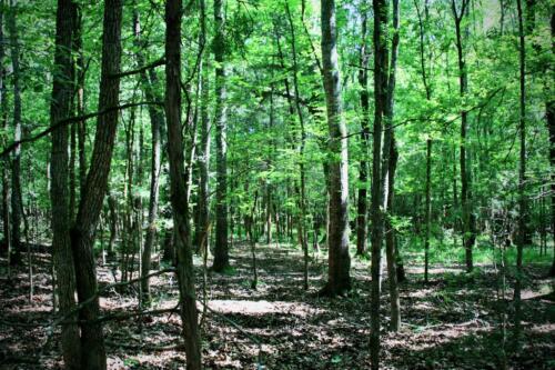 White Creek East Timber