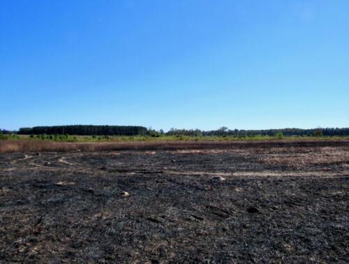 Jennys Road Field