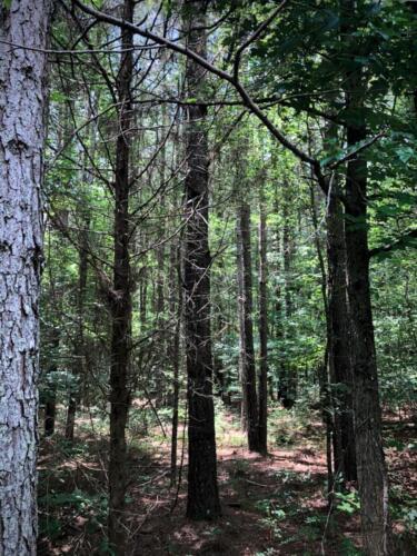 Lick Creek F Timber