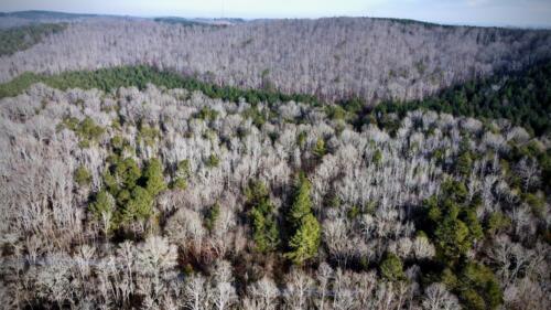 Mixed Pine Hardwood