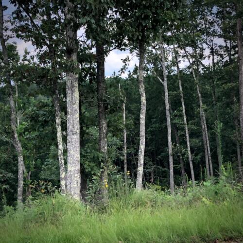 Standing Rock 1.6 Timber