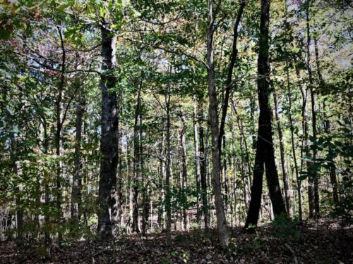 Grizzard Tract