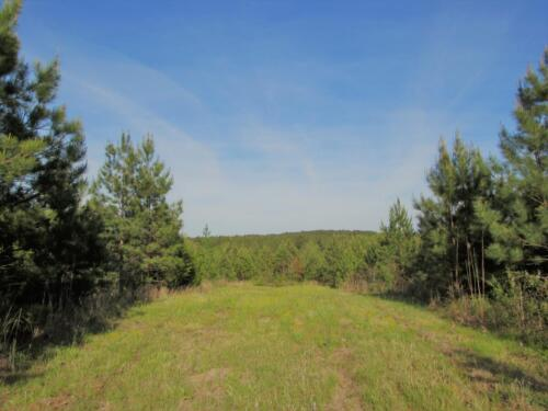 Turkey Creek Field
