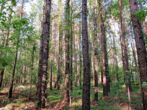 Turkey Creek Timber