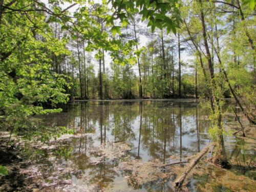 Turkey Creek Pond