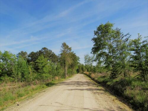 Turkey Creek Dirt Road