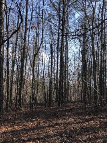 Thaxton East Pine Hardwood Upland