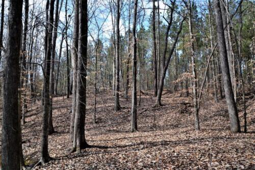 Lockhart Woods