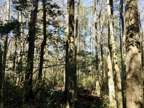 Old Dixie Tract (3)