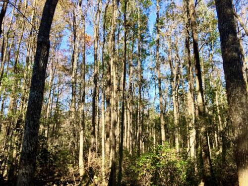 Old Dixie Tract (4)