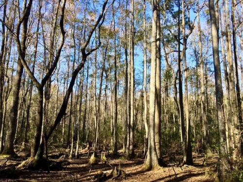 Old Dixie Tract (5)