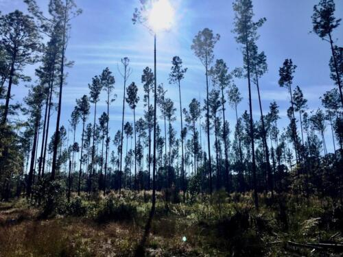 Old Dixie Tract (6)