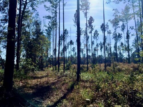 Old Dixie Tract (7)
