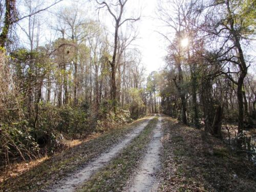 Salkehatchie Ridge Road