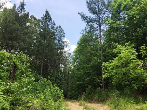 Sewee Creek Land for Sale