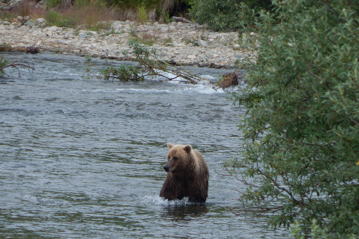 bearviewing15